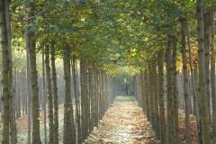 Acer camp Elsrijk